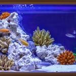Как улучшить интерьер с помощью аквариума