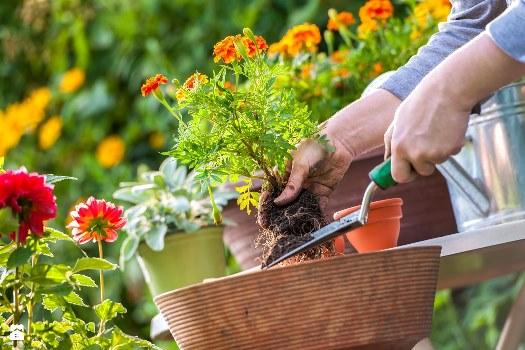 Как часто следует поливать растения в доме и в саду?