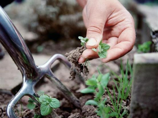Как избавиться от непрошеных гостей или несколько способов борьбы с сорняками
